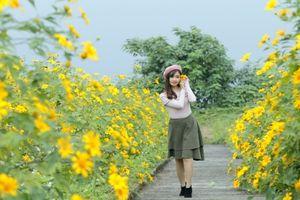 Mê mẩn ngắm hoa Dã Quỳ ngoại ô Hà Nội