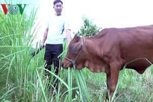 Xin ra khỏi hộ nghèo: Chuyện cũ mà mới ở Đầm Hà (Quảng Ninh)