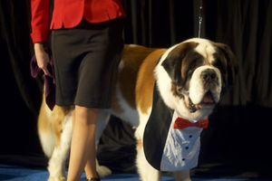 Cuộc thi dành cho chó tại Mỹ - sự kiện dễ thương nhất dịp lễ Tạ ơn