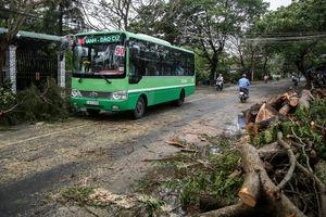 Cây xanh, trụ điện đổ la liệt ở Cần Giờ sau bão số 9