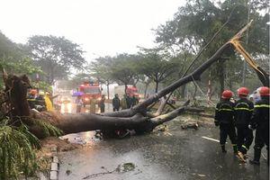 TP Hồ Chí Minh tiếp tục mưa lớn, 1 người tử vong do cây đổ