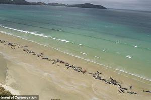 Lạ lùng 145 xác cá heo xuất hiện trên bờ biển