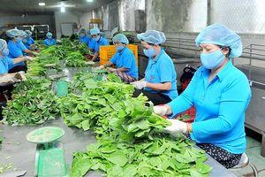 Kinh tế hợp tác, HTX đóng góp quan trọng trong phát triển KT - XH đất nước