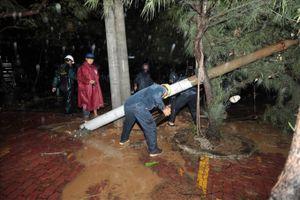 Các bến phà ở TP.HCM hoạt động trở lại sau bão số 9