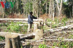 Thanh tra toàn diện các Ban quản lý rừng, công ty lâm nghiệp ở Gia Lai