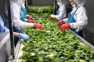 Bàn cách mở rộng cửa cho nông sản Việt vào EU