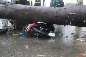 Gần 100 cây xanh ngã đổ, 3 người bị đè thương vong ở TP.HCM