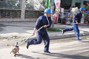 Hà Nội sẽ tiêu hủy chó thả rông mà không có người nhận