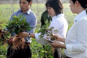Nhà nông 'lên đời' doanh nghiệp nhờ trồng dược liệu, thu tiền tỷ