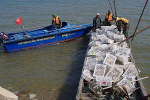 Bắt vụ vận chuyển trên 2.000 con chim bồ câu non nhập lậu