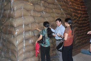 Hàng dự trữ quốc gia được đảm bảo an toàn tuyệt đối trong bão Usagi