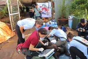 Đề xuất bổ sung quy định bảo vệ động vật hoang dã tại Việt Nam