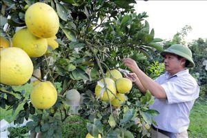 Nghị quyết 'tam nông' tạo đà phát triển nền nông nghiệp hiện đại