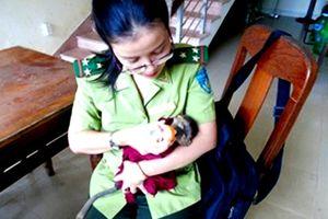 Đà Nẵng: Bàn giao chú voọc chà vá chân nâu quý hiếm cho Thảo Cầm Viên