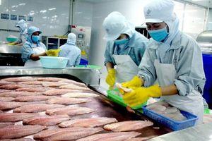 Khoảng tối của ngành cá tra Việt