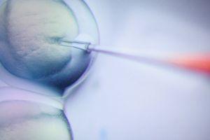 Quá trình tạo ra cặp song sinh biến đổi gen đầu tiên trên thế giới diễn ra thế nào?
