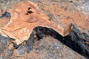 'Ăn' đất rừng, hàng loạt cán bộ Đắk Nông bị kỷ luật