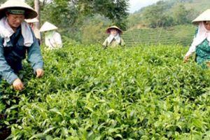 Sơn Dương - Điểm sáng nông thôn mới xứ Tuyên