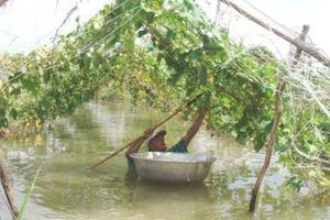 Hậu bão số 9 ruộng rau nước ngập tới cổ, TP.HCM lo 'sốc' giá rau