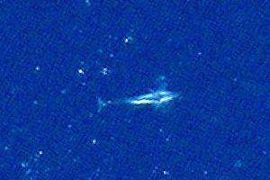 Quan sát cá voi từ...vũ trụ