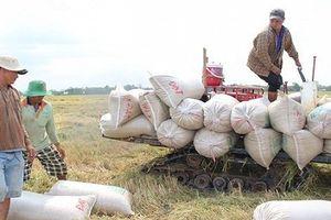 Xuất khẩu gạo có sự 'lột xác'