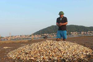 Cá, ngao chết hàng loạt không rõ nguyên nhân ở Nghệ An