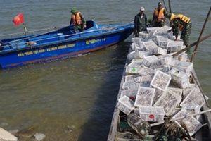 Bắt giữ hơn 2.000 con chim bồ câu non nhập lậu từ Trung Quốc