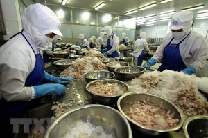 Bạc Liêu với khát vọng xuất khẩu tôm đạt gần 1tỷ USD