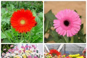 6 cây lọc không khí bạn nên trồng trong nhà