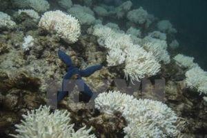 WB cam kết đầu tư cho tài nguyên nước và các vấn đề đại dương