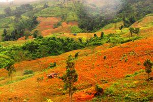 Hiệu quả từ chuyển hóa địa bàn trọng điểm về phá rừng ở Leng Su Sìn