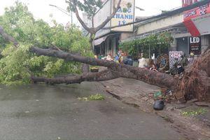 TP.HCM, Khánh Hòa: Thiệt hại nặng nề sau bão số 9