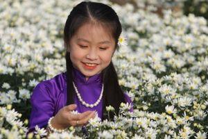 Hà Nội đẹp dịu dàng mùa hoa cúc họa mi