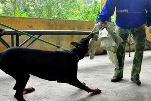 Hà Nội: Lập đội phản ứng nhanh bắt chó thả rông, không rọ mõm