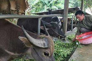 Nông thôn xứ Tuyên 'thay áo mới', nông dân giàu lên nhanh