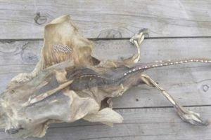 Xác sinh vật kỳ dị dạt vào bờ biển khiến dân kinh hãi