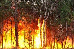 Australia: Nơi bão lũ, nơi cháy rừng