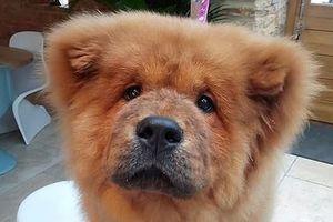 Chó cắn cảnh sát bị bắt giam 9 tháng