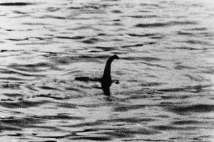 Phải ứng xử thế nào nếu bạn bắt được quái vật hồ Loch Ness?