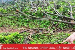 Vụ việc người dân chiếm đất rừng của Công ty Cao su Hà Tĩnh: Cần sớm xử lý dứt điểm!