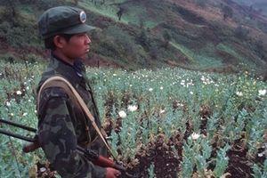 Cảnh sát đau đầu vì các 'vành đai ma túy khủng' từ Myanmar ra thế giới