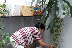 Đà Nẵng: Tăng cường giám sát, không để dịch sốt xuất huyết bùng phát trên diện rộng