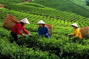Phân bón Văn Điển cùng nhà nông làm giàu trên vùng đất Thái Nguyên