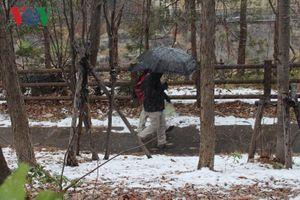 Lãng mạn những bông tuyết đầu mùa tại Sapporo Nhật Bản