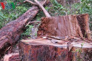 Tập trung điều tra các vụ phá rừng ở Khu bảo tồn thiên nhiên Tà Cú