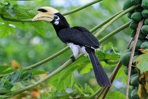 Doanh nhân bị 'tố' ăn thịt chim quý: Kết luận là chim Cao Cát, không phải Phượng Hoàng Đất