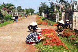 Nông thôn mới Đắk Lắk thành công lớn từ những việc nhỏ