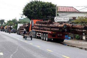 Bắt 4 xe chở gỗ khủng