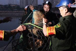 Theo chân đội bắt chó thả rông lúc mờ sáng ở Hà Nội