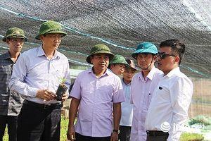 Hà Tĩnh: Dự án chăn nuôi 4.500 tỷ liên quan ông Trần Bắc Hà hiện ra sao?